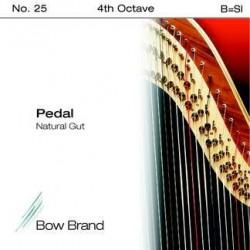 B - SI 25 octave 4 boyau